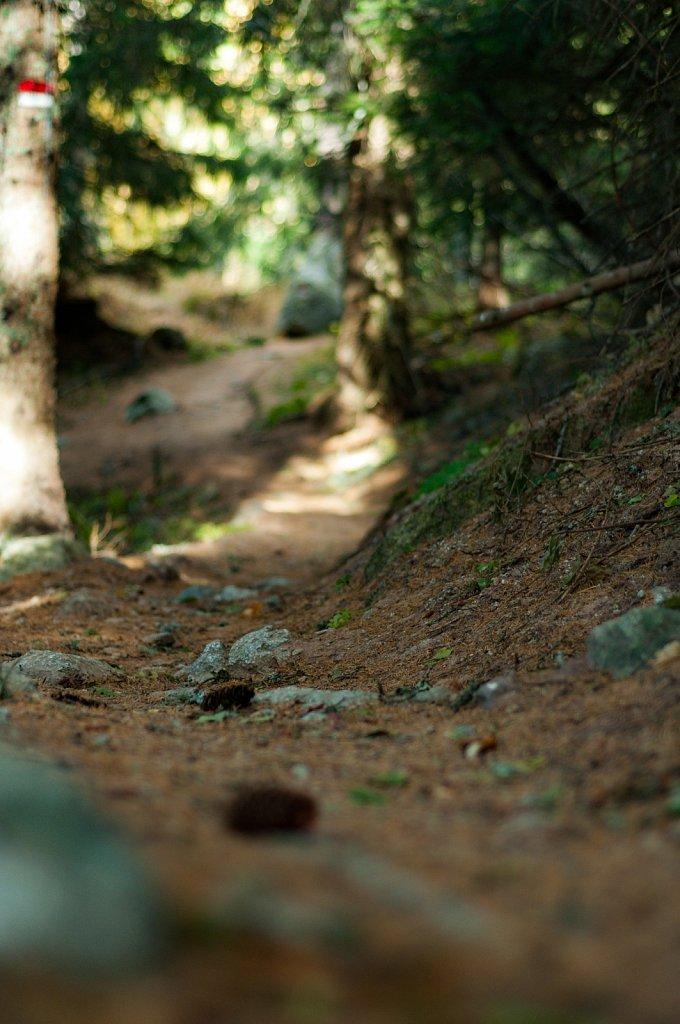 Path IV