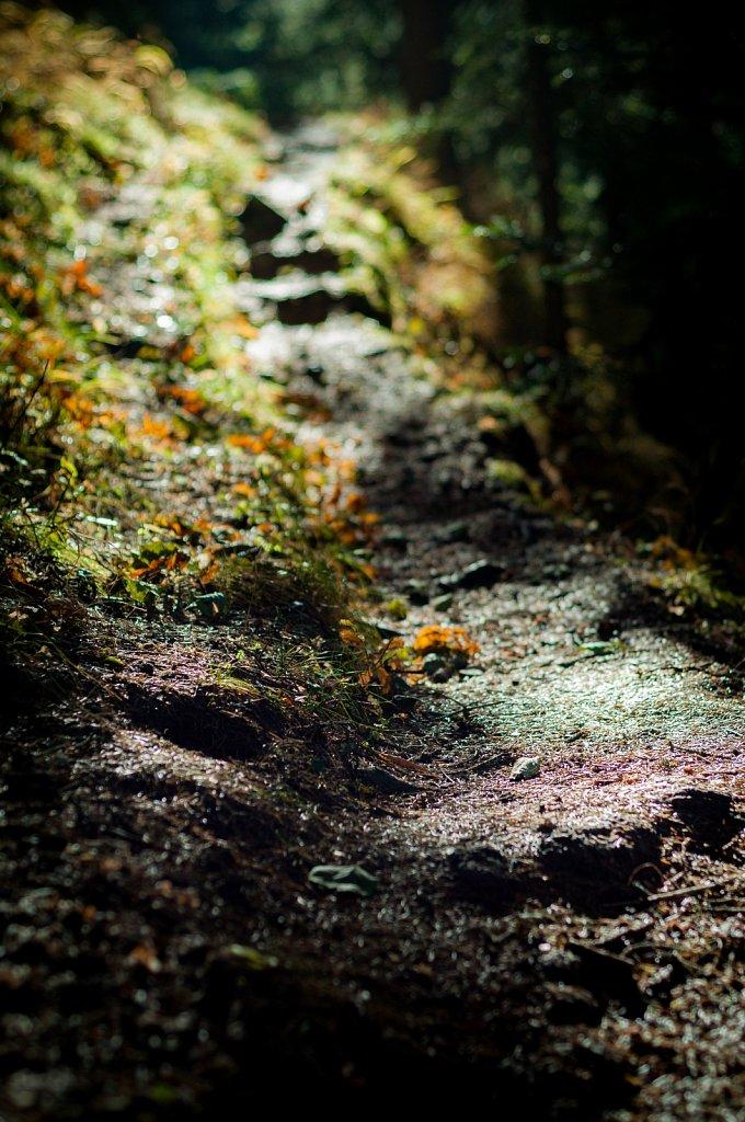 Path V
