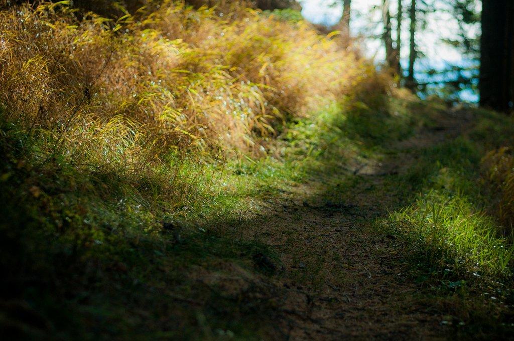 Path VII